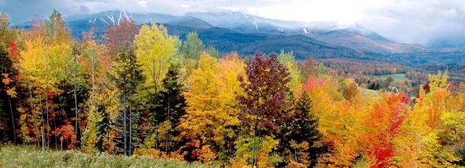 45 Vermont